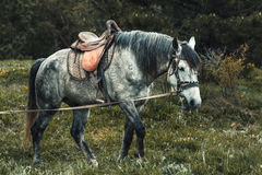 Horse on the pasture. Stock Images