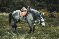 Horse on the pasture. Stock Photography