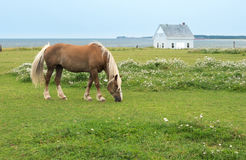 Horse, pasture at seaside Stock Image