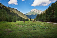 Horse pasture at slovenian green fields Royalty Free Stock Photos