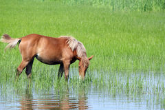 Horse on pasture spring season Royalty Free Stock Photo