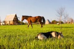 Horse pasture at summer Stock Image