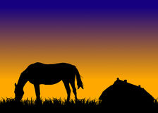 Horse on pasture at sunset near stable Stock Image