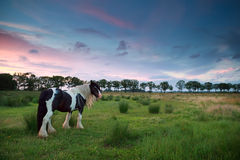 Horse on pasture at sunset Royalty Free Stock Image