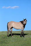 Horse in the Pasture Stock Image