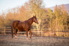 Horse on pasture in warm evening light. Color toned image; shallow DOF stock photo