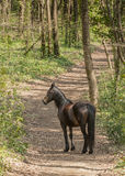 Horse on pasture Royalty Free Stock Photography