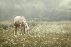 Horse in a Pasture of Wildflowers Stock Photos