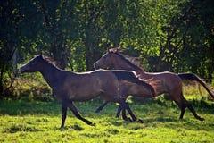 Horse, Pasture, Wildlife, Fauna stock photos
