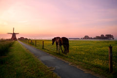 Horse on pasture and windmill at sunrise Stock Images