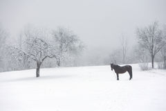 Horse pasture in winter Stock Photo