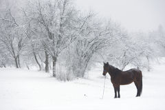 Horse pasture in winter Royalty Free Stock Images