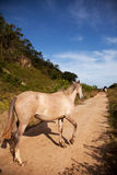 Horse in the path Stock Image