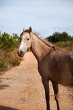 Horse in the path Royalty Free Stock Images