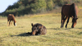 Horse peep Stock Photography