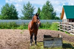 Horse in the pen Stock Images