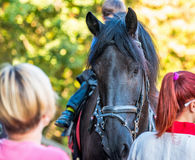 Horse among people. The horse carries somebody on its horseback royalty free stock photo