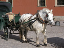 Horse and phaeton. Horse dragged touristic phaeton, in old city of Warsaw, Poland Stock Images