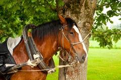 Horse photo Royalty Free Stock Photo