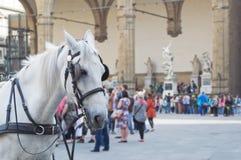 Horse in Piazza della Signoria. White horse in Piazza della Signoria, Florence Royalty Free Stock Photography