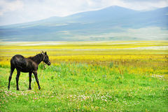 Horse on a plain in summer Stock Photos
