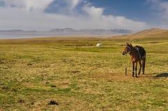 Horse on plane in Kyrgyzstan Royalty Free Stock Photos