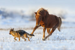 Horse play with dog in snow