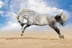 Horse play fun stock photos