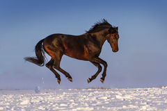 Horse play in snow Stock Images