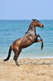 Horse play Stock Images