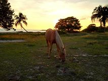 Horse in Playa Larga royalty free stock photos