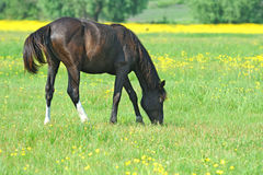 Horse, Playful kid of Horse, Foal on a lawn Stock Photos