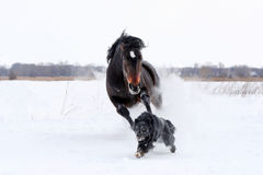 Horse playing with a dog Royalty Free Stock Images