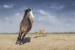 Horse playing with dog in field. Brown Horse playing with dog in field Royalty Free Stock Photos