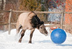 Horse playing football Royalty Free Stock Photography