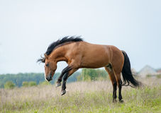 Horse playing on freedom Stock Photo