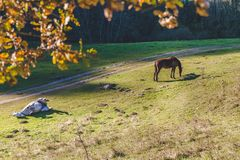 Horse playing in nature. Horse playing in the forest Royalty Free Stock Photo