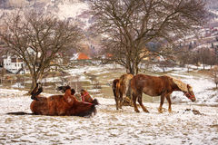 Horse playing in winter time stock photography