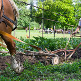 Horse ploughing Stock Photography