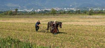 Horse Ploughing Stock Photos