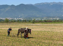 Horse Ploughing Royalty Free Stock Image