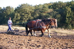 Horse ploughing in Poland. A man ploughing a field in a traditional way, using horses. Poland. Even today, some Polish farmers plough their fields using horses Stock Images