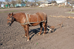 Horse with plow Royalty Free Stock Image
