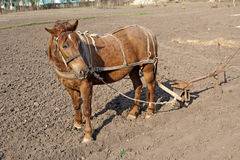 Horse with plow Royalty Free Stock Photo