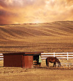 Horse and plowed over land Royalty Free Stock Image