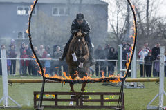 Horse police fire barrier jumping Stock Image