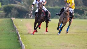 Horse polo Ball is floating Royalty Free Stock Photo