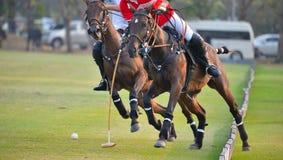 Horse Polo Player battle Stock Photography
