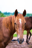 Horse Polo Player battle Stock Photos
