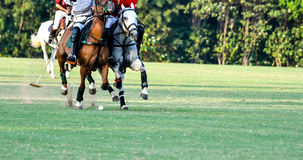 Horse Polo Player Stock Image